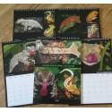 2018 Gecko Diet Calendar
