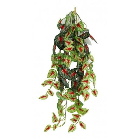 "Pangea Hanging Bush - 24"" Caladium"