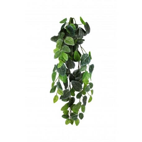 "Pangea Hanging Bush - 24"" Fittonia"