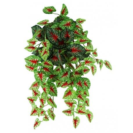 "Pangea Hanging Bush - 18"" Caladium"