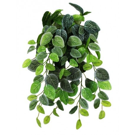 "Pangea Hanging Bush - 18"" Fittonia"