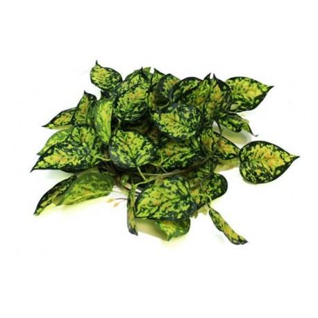 Pangea Leafy Vine Devil's Ivy