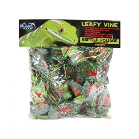 Pangea Leafy Vine -Caladium