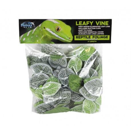 Pangea Leafy Vine - Fittonia