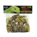 Pangea Leafy Vine - Japanese Laurel