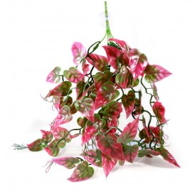 Pangea hanging plant - Red