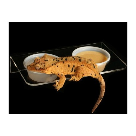 Pangea Magnetic Gecko Ledge - Acrylic Large